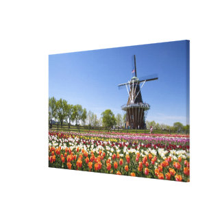 Windmill Island park with tulips in bloom at Canvas Print