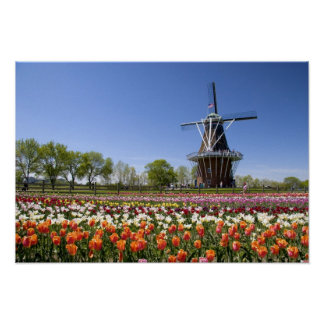 Windmill Island park with tulips in bloom at Poster