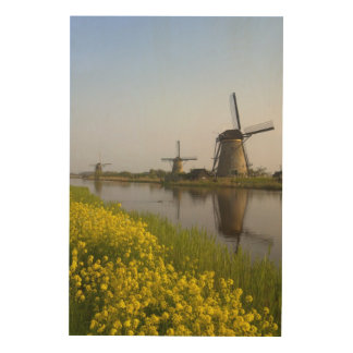 Windmills along the canal in Kinderdijk Wood Wall Art
