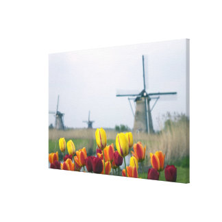 Windmills and tulips along the canal in gallery wrap canvas