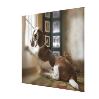 Window dog canvas print