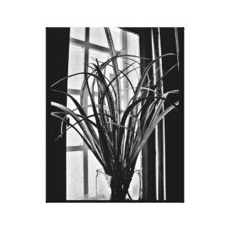 Window Plant View Canvas Print
