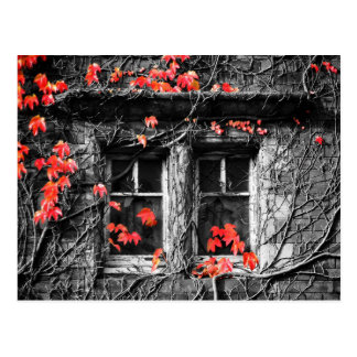 Windows Framed with Autumn Leaves Postcard