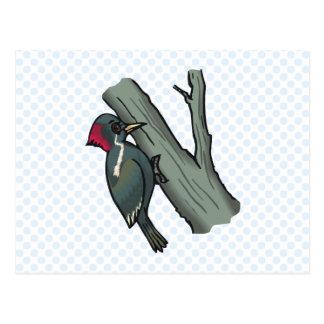 Windy Woodpecker Postcard