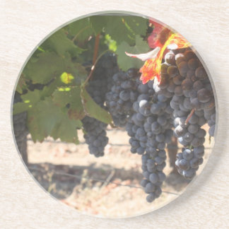 Wine Country Grapes Coaster