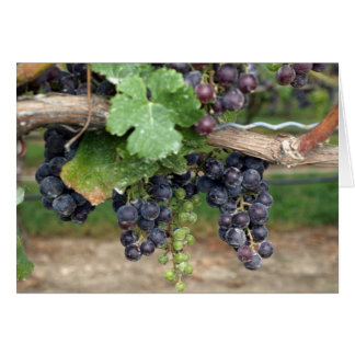 Wine on the Vine Card