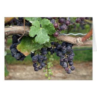 Wine on the Vine Card