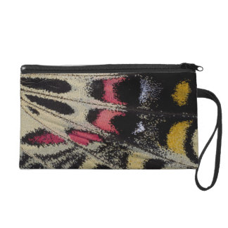 Wing underside close-up Bhutanitis mansfieldi Wristlet
