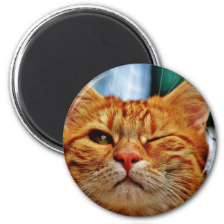 Wink kitty magnet