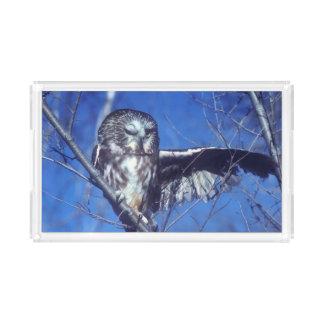 Winking owl acrylic tray
