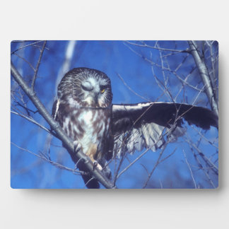 Winking owl plaque