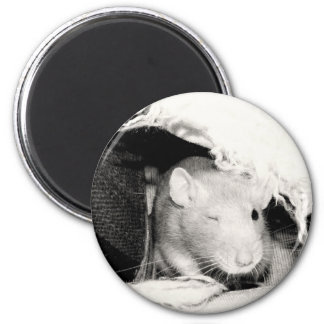 Winking Rat Fridge Magnets