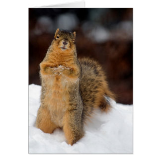 Winking Squirrel Greeting Card