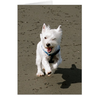 Winking Westie Greeting Card