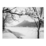 Winona MN Postcard: Sugarloaf with Frosty Branch