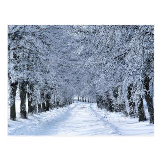 Winter alley postcard