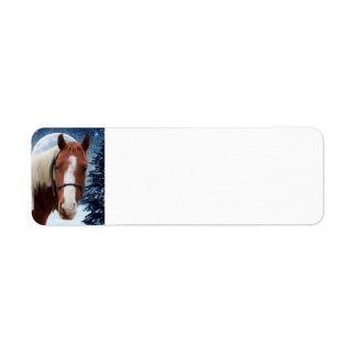 Winter American Paint Horse Return Address Label