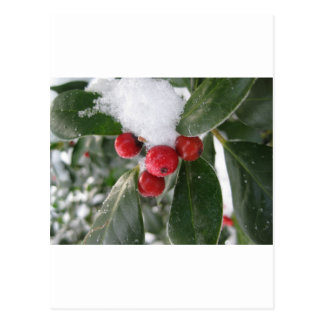 winter and red fruits postcard