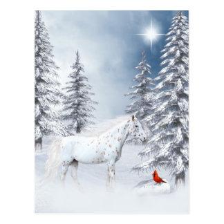 Winter appaloosa post cards