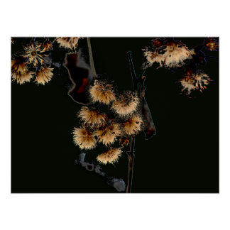 Winter Aster in Black Poster