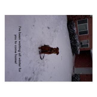 Winter Away Postcard