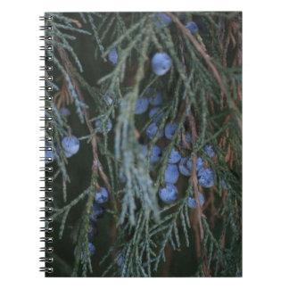 Winter Berries Notebooks