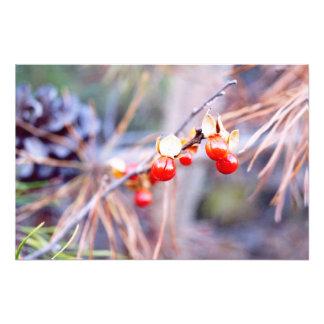 Winter Berries Photo Print
