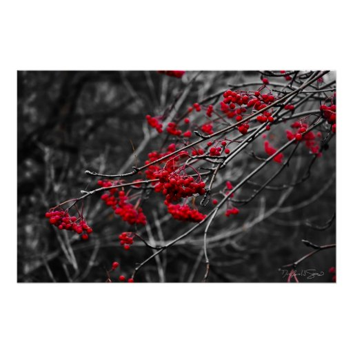 Winter Berries Print