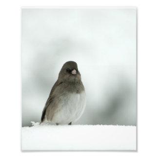 Winter Bird Photo Art