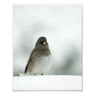 Winter Bird Photo Print