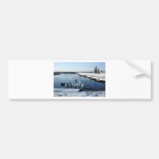 Winter boating lake scene with birds feeding bumper stickers