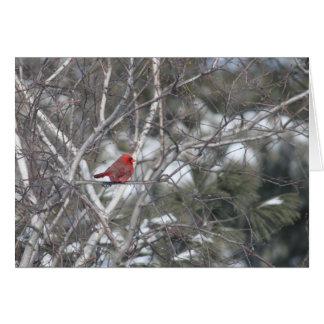 Winter Cardinal Card
