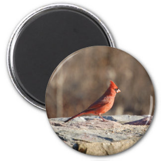 Winter Cardinal - magnet