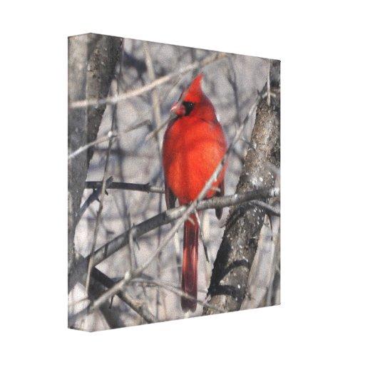 Winter Cardinal Wrapped Canvas Canvas Prints