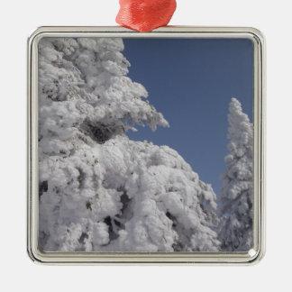 Winter Christmas Trees Christmas Ornament
