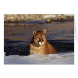 Winter Cougar Card