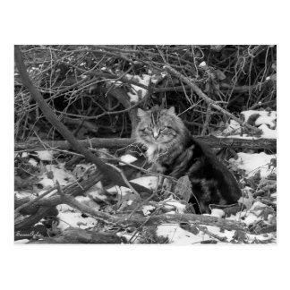 Winter Feral Forest Cat Postcard