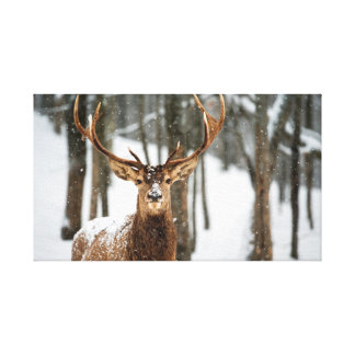 Winter Forest Deer Canvas Print