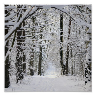 Winter Forest Path Poster