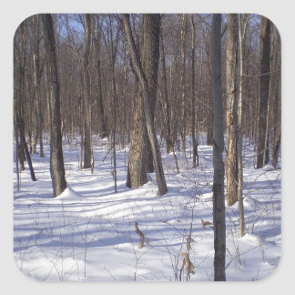 Winter Forest Square Sticker