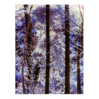 Winter Frosty Forest Morning Switzerland Postcard