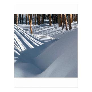 Winter Golden Trees Snow Tesuque Basin New Post Card