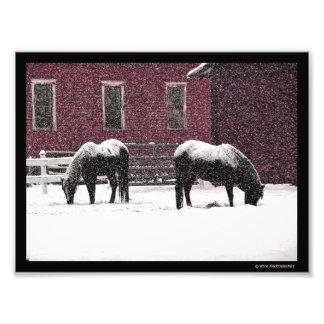 Winter Grazing Photo Print
