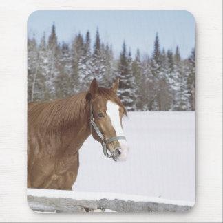 Winter Horse Mouse Mats