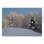 Winter In Maine Greeting Card