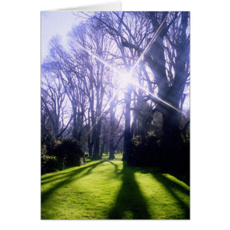 Winter in the Fitzroy Gardens Greeting Card