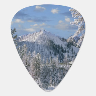 Winter in Yellowstone National Park, Wyoming Plectrum