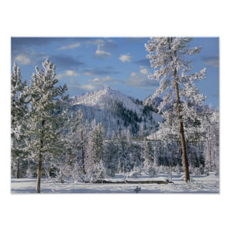 Winter in Yellowstone National Park, Wyoming Poster