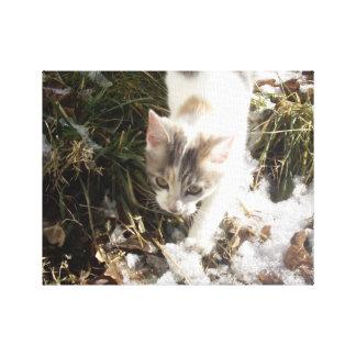 Winter Kitten Gallery Wrapped Canvas