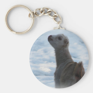 WINTER LAMANCHA KID BABY GOAT  IN SNOW BASIC ROUND BUTTON KEY RING